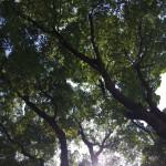 上野公園昼寝