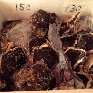 岩牡蠣6_26