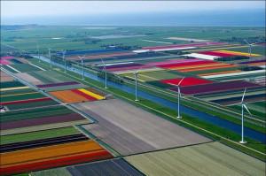 オランダ(チューリップ畑)