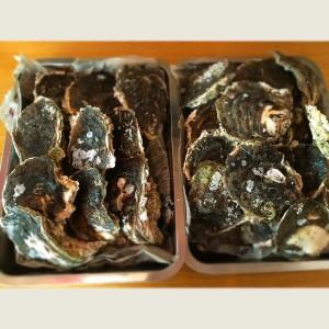 岩牡蠣写真