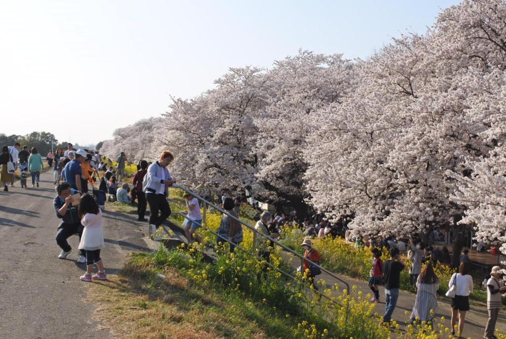 熊谷桜堤③